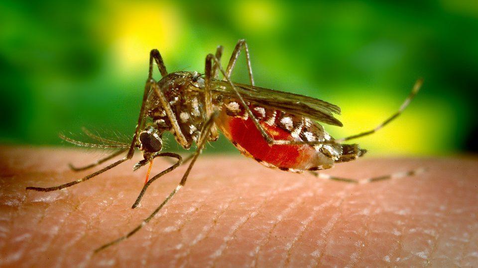 12 фактов о Комарах