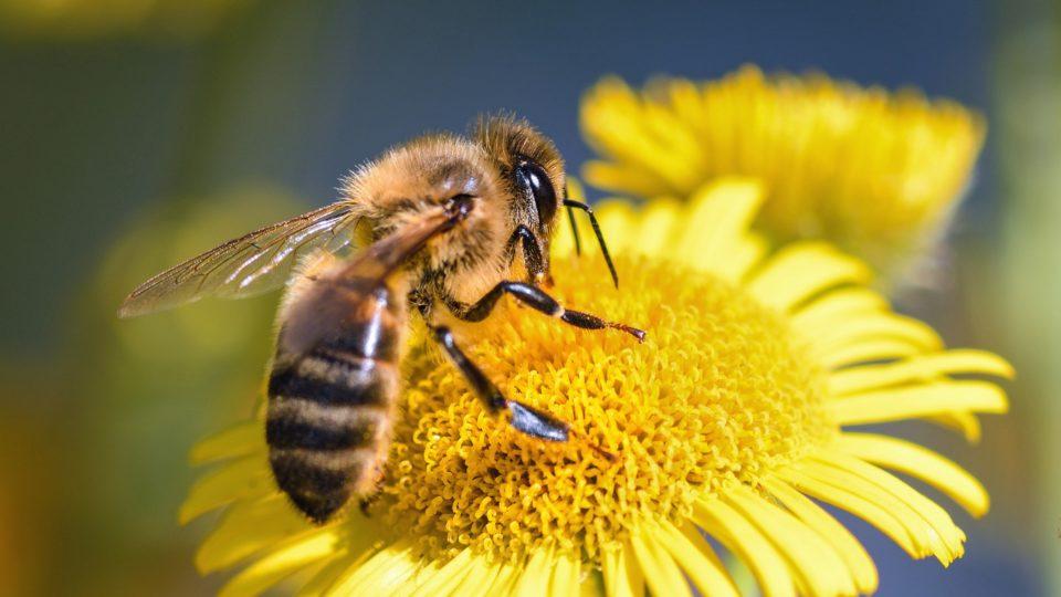 20 фактов о Пчёлах