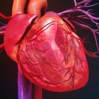 15 фактов о Сердце