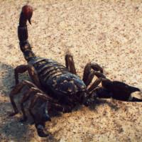 16 фактов о Скорпионах