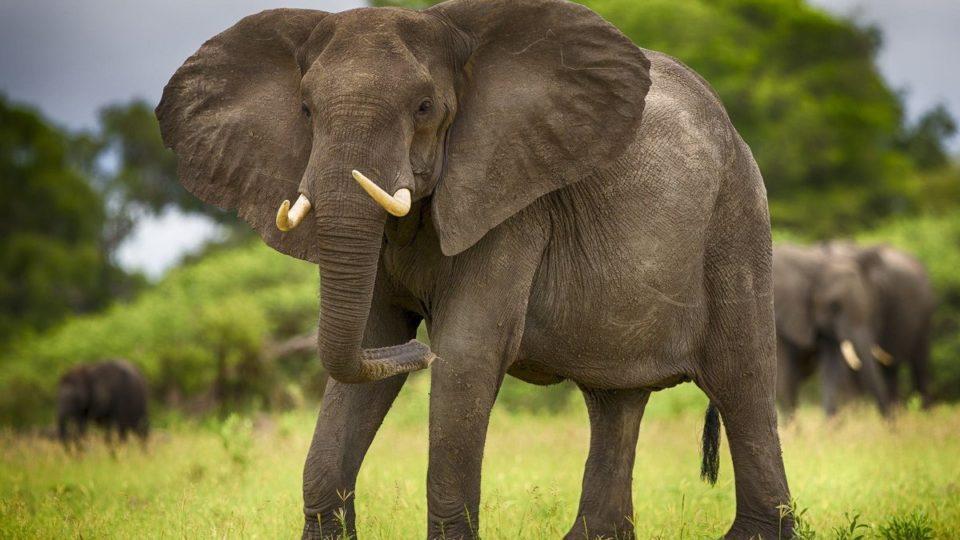 17 фактов о Слонах
