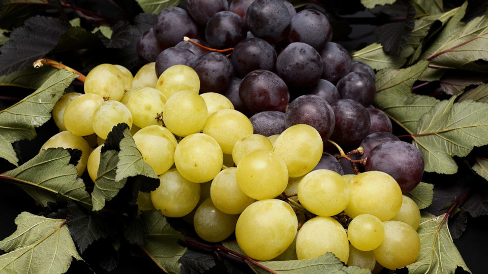 15 фактов о Винограде