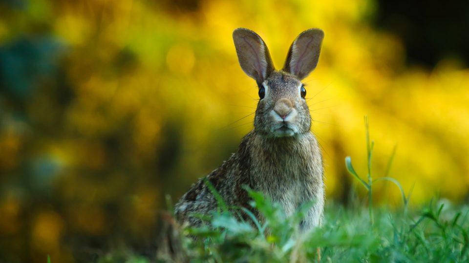 19 фактов о Зайцах