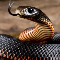 19 фактов о Змеях